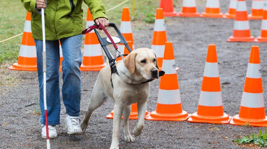 Guide dog refusals and your rights